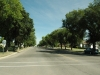 avenue-of-trees-2