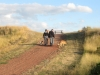 couple-walking-dogs-on-red-path