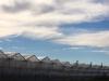 greenhouses-1